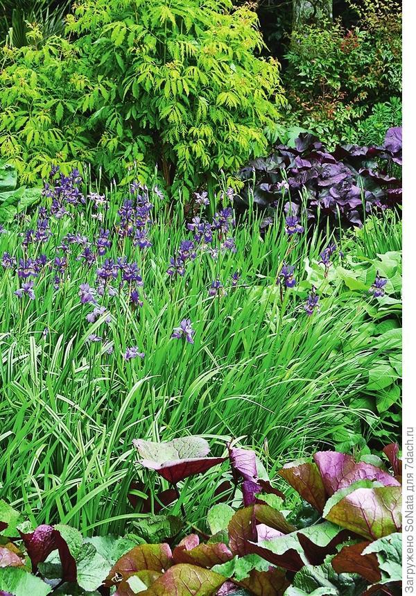 Ирис сибирский можно сделать основой неброской садовой композиции.