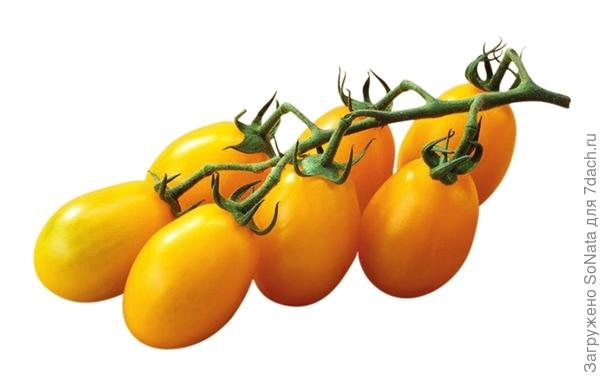 Плоды желтых грушевидных помидоров 'Yellow Submarine' весят всего по 15 г.