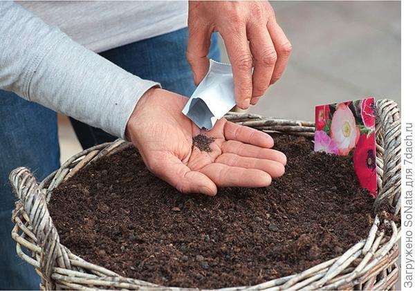Корзины сначала выложите пленкой, положите слой керамзита или щебня, закройте все нетканым материалом и заполните корзину землей. Равномерно рассыпьте семена, аккуратно утрамбуйте землю, обильно полейте.