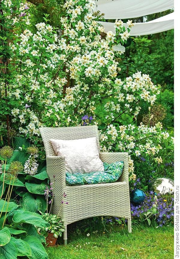 Чубушник (Philadelphus) 'Belle Etoile' высотой до 1,5 м цветет в июне — июле. Поставьте рядом удобное кресло - и досуг захочется проводить только там.