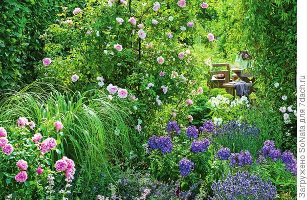 Пряные травы, цветочные многолетники и розы своими восхитительными ароматами покорили сердца многих садоводов. .
