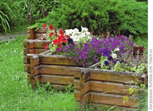 Живописные коряги, как часовые, стоят по обе стороны садовой дорожки.