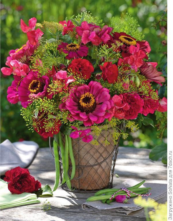 Зонтики фенхеля и душистый горошек соседствуют с карминно-красными цинниями и розами.