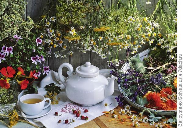 Из целебных трав, цветов и плодов, собранных в нужное время и в нужном месте, можно составлять ароматные и вкусные смеси.