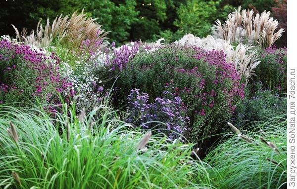 Скромное очарование злаковых трав способно заворожить любого - их нежный ажур уместен в садах разнообразных стилей и привлекателен во все времена года.