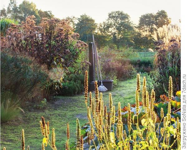 Пшенично-желтые свечки отцветшего многоколосника морщинистого (Agastache rugosa) Alba добавляют в цветник солнечной энергии. Особенно выигрышно это растение смотрится в групповых посадках.