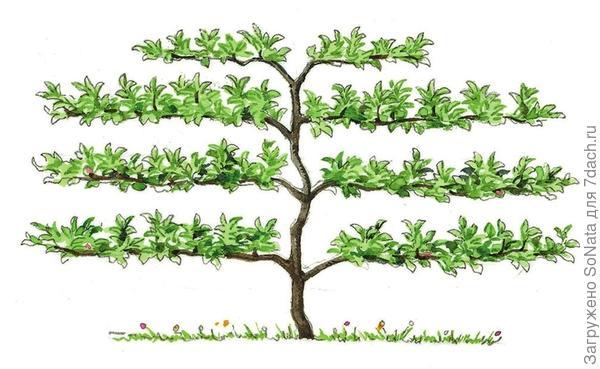 Вертикальная пальметта
