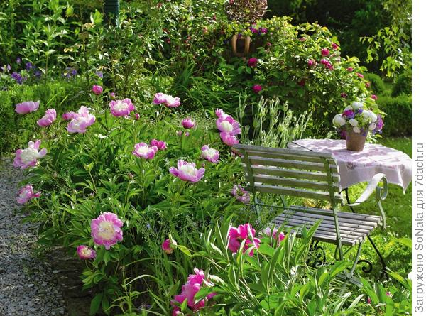 Эффектно украшают сад похожие на блюдца цветки сорта Bowl of Beauty с большим количеством тычинок.
