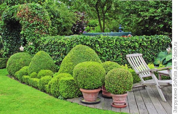 Гармонию и покой вам подарят деревья и кустарники с шаровидной формой кроны.