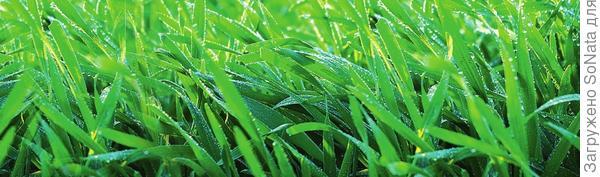 По-прежнему актуальны аэрация газона, борьба с сорняками и тщательный полив. Устраивайте нежной травке душ после каждой стрижки, а между ними - по погоде.