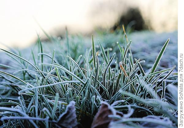 Не прокладывайте тропинки в снегу там, где спит газон