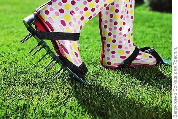 Для передвижения по лужайке используйте специальные сандалии с шипами - они не повредят молодые травинки и откроют доступ воздуху к их корням.