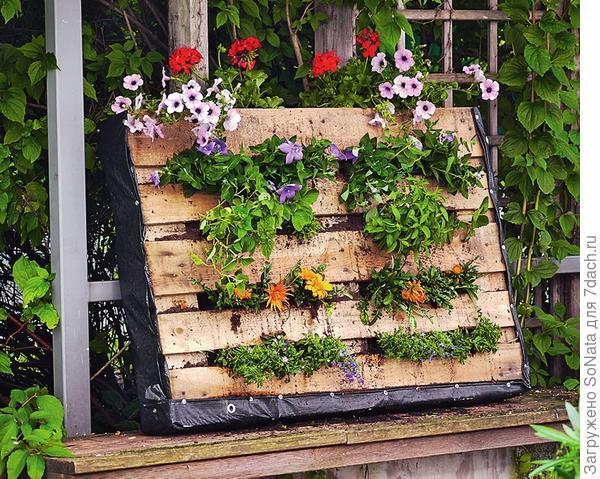 В идеале растениям надо дать неделю или две для укоренения в горизонтальном положении, и уже затем ставьте поддон вертикально.