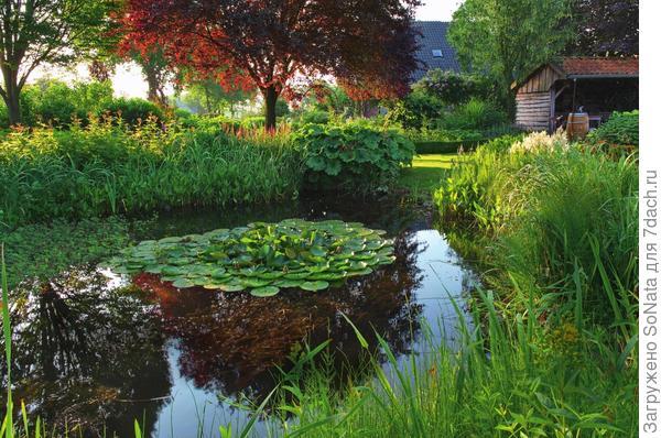Разнообразные влаголюбивые растения, такие как аир болотный, таволга вязолистная и астильбоидес пластинчатый обрамляют садовый пруд, оставляя только небольшой проход к нему.