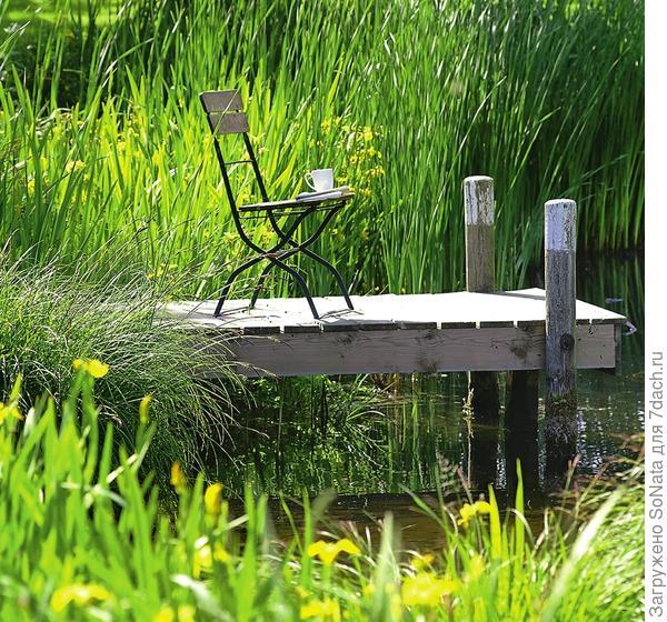 С маленьких мостков удобно любоваться богатым растительным и животным миром водоема.