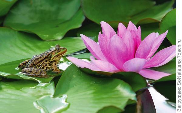 С маленьких мостков удобно любоваться богатым растительным и животным миром водоема, главное - не замечтаться и не упасть в воду!
