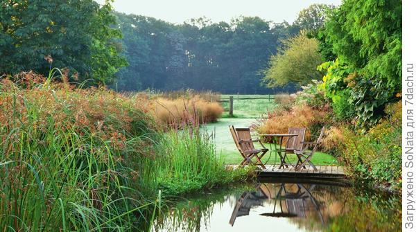 Очень естественно и живописно смотрится большой садовый пруд с пышными зарослями камыша.