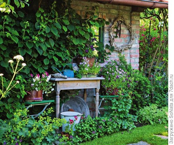 Замаскировать непривлекательный для пересадки растений помогут красиво цветущие горшечные питомцы. Здесь же по земле протянули ленту из манжетки, яснотки крапчатой и водосбора, а по стене дома пустили виться актинидию.