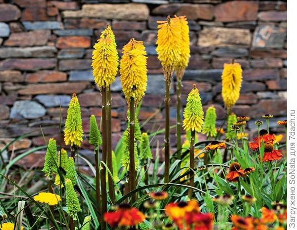 Красновато-коричневые камни идеально подходят для сада в южном стиле.