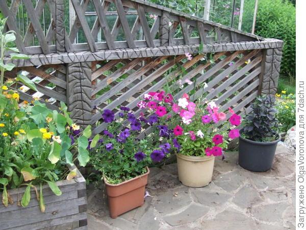 Даже минимальное количество растений может дать хороший эффект