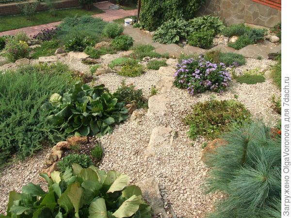 Альпийская горка решает проблемы и других растений