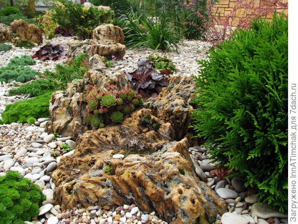 каменистый сад)