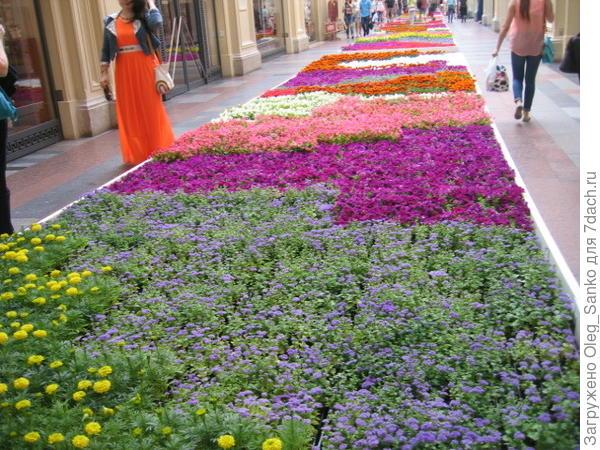 Цветы были и на линиях магазина