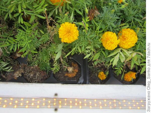 Рядом с цветами - подсветка