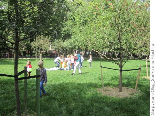 Новые деревья окружены заботой местных специалистов