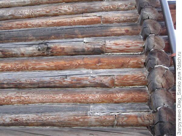 Дефект бревна - механическое повреждение. Оно  в дальнейшем станет очагом гниения древесины.