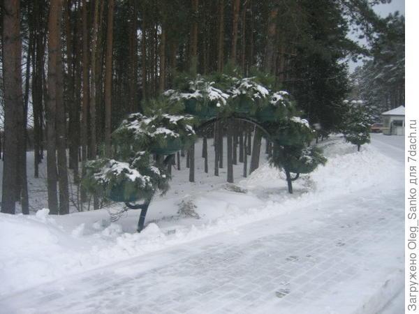 Цветочная арка - вид в декабре