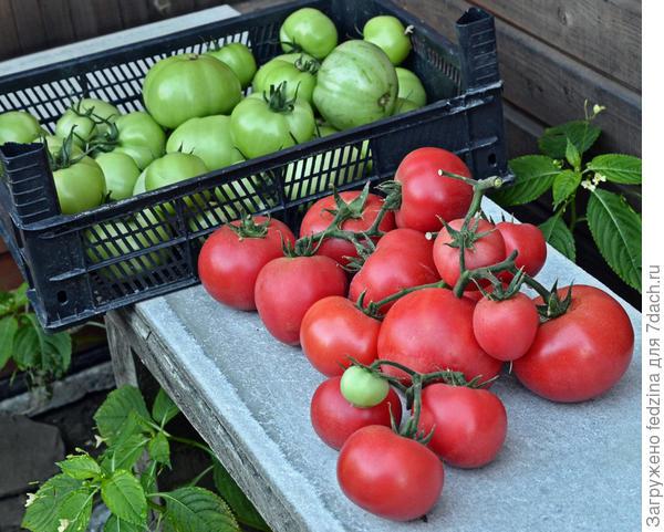 Ящик зеленых помидор