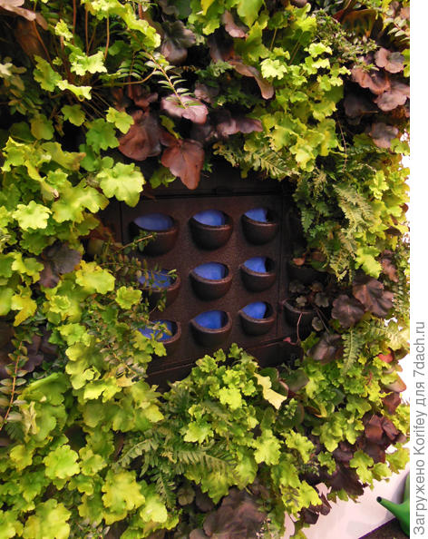 Вертикальное озеленение - так выглядят пустые ячейки сверху