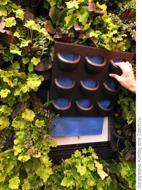 Вертикальное озеленение - так выглядят пустые ячейки