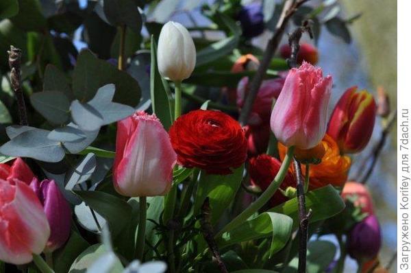 Они очень хорошо стоят в срезке вместе с тюльпанами 2