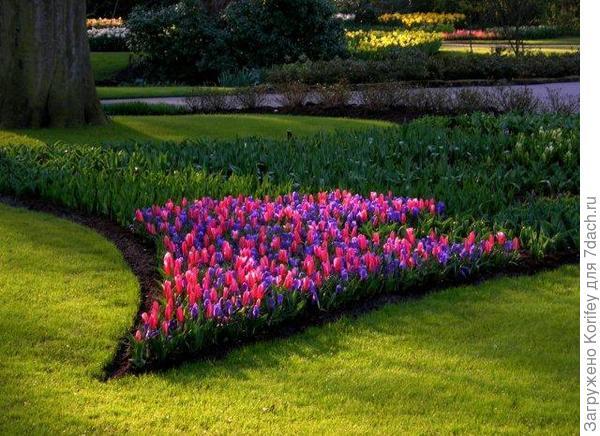 Крокусы с тюльпанами 3