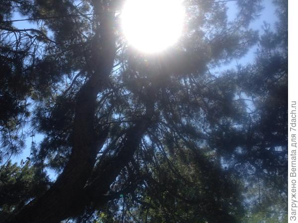 Светить всегда,  светить везде,  до дней последних донца,  светить —  и никаких гвоздей!  Вот лозунг мой —  и солнца!