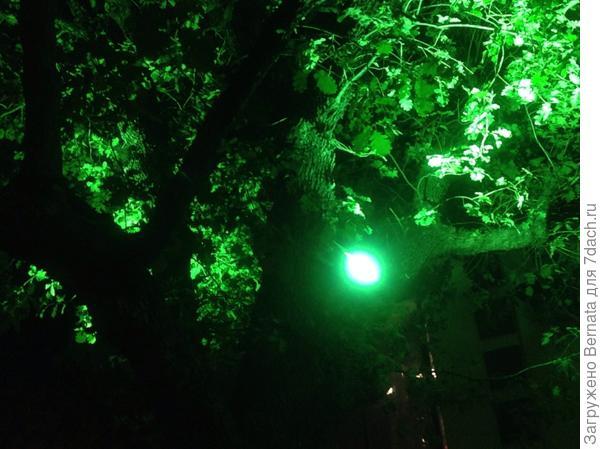 А это обычный фонарь сквозь листву