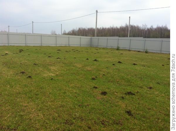 Вот такой мы увидели газон, когда приехали на дачу 27.07.2013г.