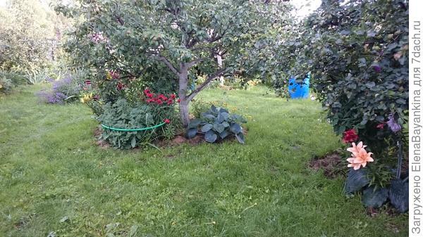 Хвосты само собой прекрасно чувствуют себя под кроной плодовых деревьев