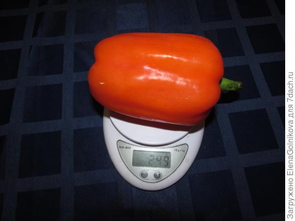 перец на весах