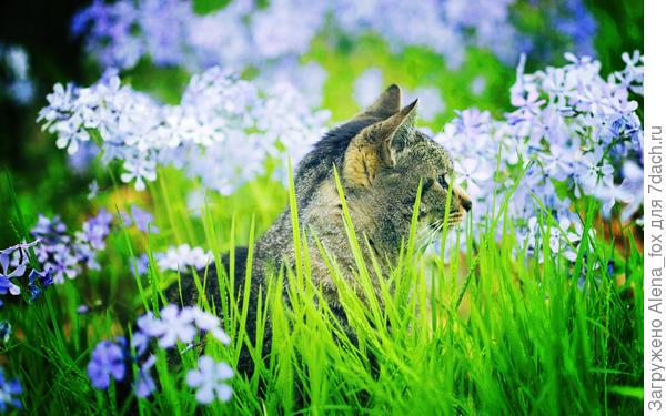 Котенок. Фото с сайта goodfon.ru