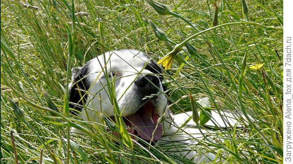 Животное может пострадать от теплового удара. Фото с сайта goodfon.ru
