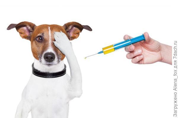 Обязательно приготовьте аптечку для своих четвероногих друзей. Фото с сайта pinterest.com