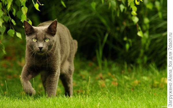 В траве живут клещи, которые опасны для животных. Фото с сайта bankoboev.ru