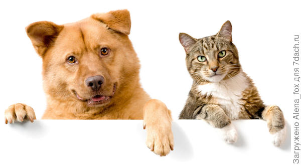 Пес и кот, фото с сайта pinterest.com