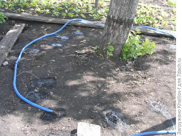 Равномерный полив под кроной дерева самодельным поливальщиком.