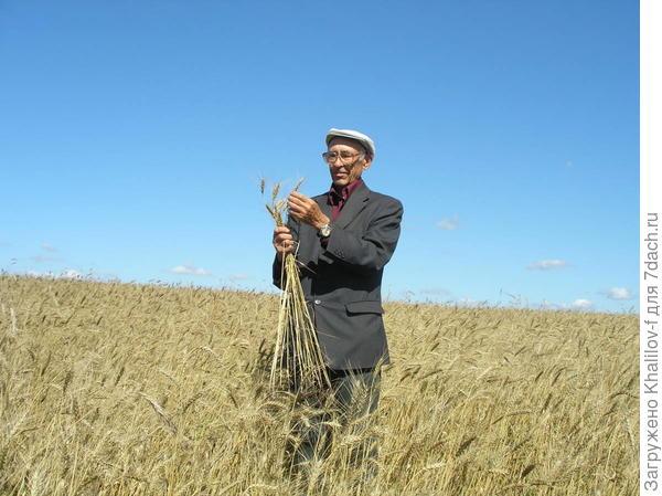 На пшеничном поле.