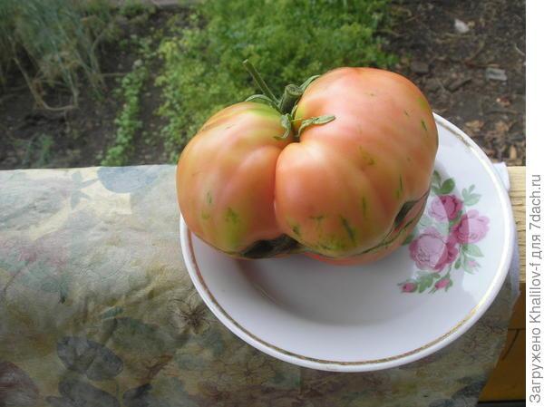Тот же помидор на тарелке.
