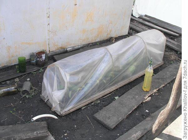 Вот под такими мини парниками при 100% влажности происходит укоренение зеленых черенков.